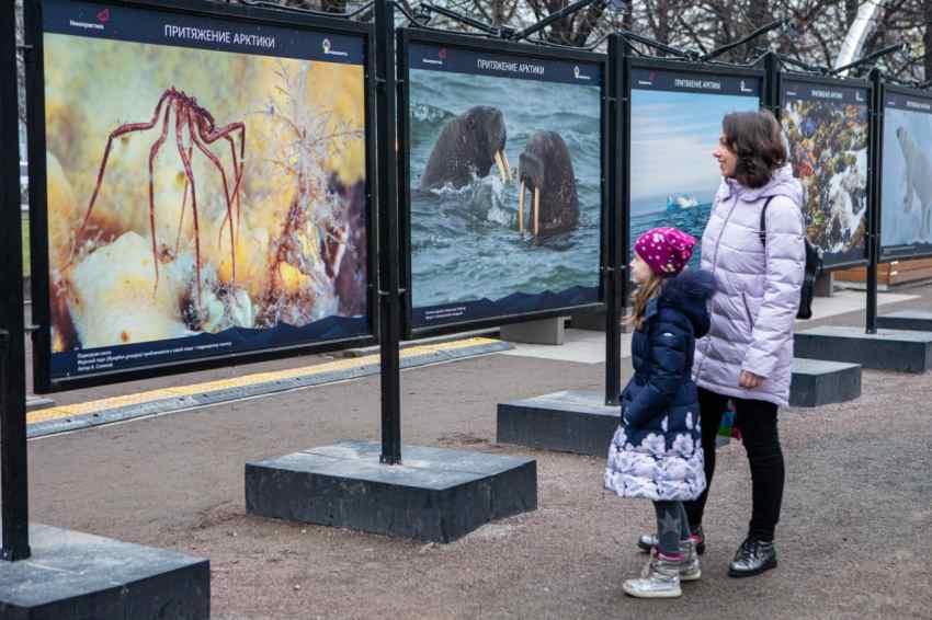 «Роснефть» представила в Архангельске выставку «Притяжение Арктики»